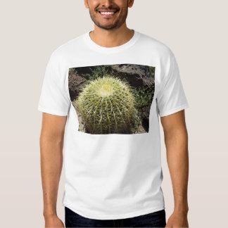 Cactus de barril playera
