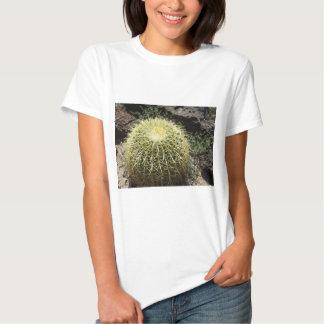 Cactus de barril playeras