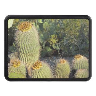 Cactus de barril tapa de remolque