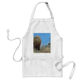 Cactus de barril un cactus en el desierto Cact de Delantal