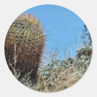 Cactus de barril un cactus en el desierto Cact de Etiqueta Redonda