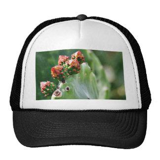Cactus de Beavertail Gorra