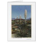 Cactus de CaliforniaYucca en la floración en desie Tarjetón