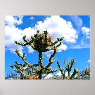 """Cactus """"de Cholla (Choy-Ya) con la jerarquía """" Póster"""