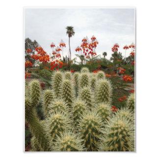 Cactus de Cholla e impresión mexicana de la ave Impresión Fotográfica