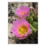 Cactus de Colorado Hookless Felicitación