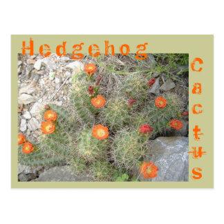 Cactus de erizo postales