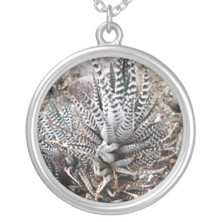 Cactus de la cebra de Spikey Colgante Redondo