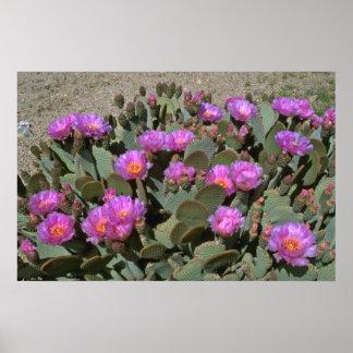 Cactus de la cola del castor poster