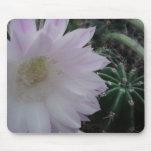 Cactus de la flor blanca alfombrillas de ratón