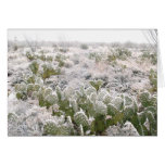 Cactus de la nieve tarjetas