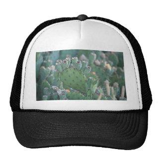 Cactus de la paleta gorras de camionero