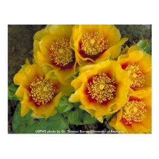 Cactus de la postal/del higo chumbo