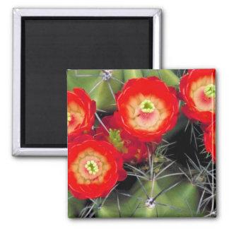Cactus de la taza de clarete imanes para frigoríficos
