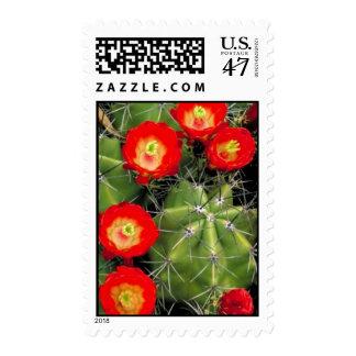 Cactus de la taza de clarete sello postal