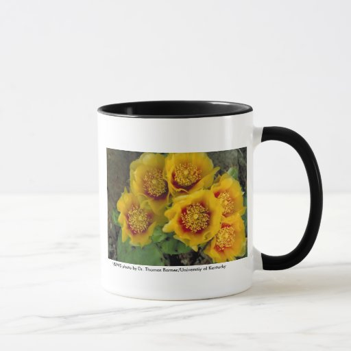 Cactus de la taza/de la pera de Prickley en la