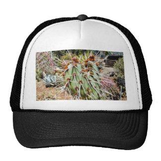Cactus de las espinas de las espinas dorsales del gorras