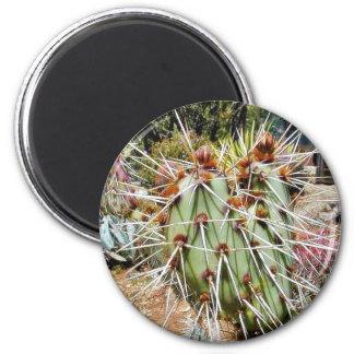 Cactus de las espinas de las espinas dorsales del  imanes