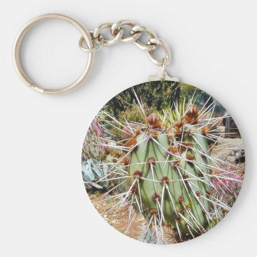 Cactus de las espinas de las espinas dorsales del  llavero