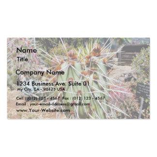 Cactus de las espinas de las espinas dorsales del  tarjetas personales