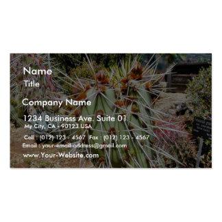 Cactus de las espinas de las espinas dorsales del  tarjetas de visita
