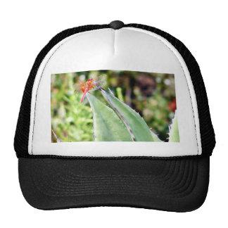 Cactus de las libélulas de la libélula gorras de camionero