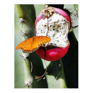 Cactus de las mariposas de la mariposa postales