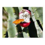 Cactus de las mariposas de la mariposa tarjeta postal