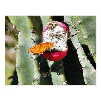 Cactus de las mariposas de la mariposa tarjetas postales