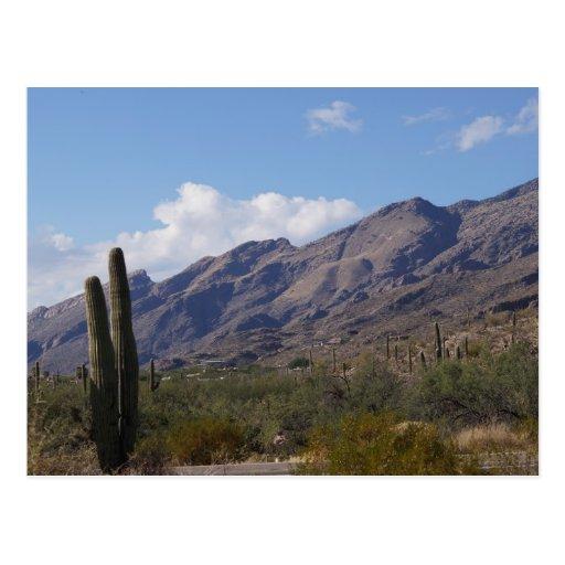 Cactus de las montañas del viaje de Arizona bluesk Tarjetas Postales
