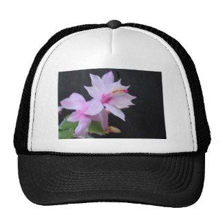 Cactus de navidad fotografía gorras
