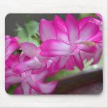 Cactus de navidad rosado alfombrilla de ratón