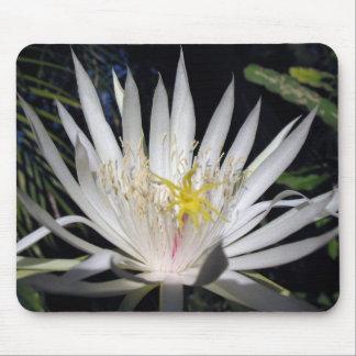Cactus de orquídea alfombrillas de ratones
