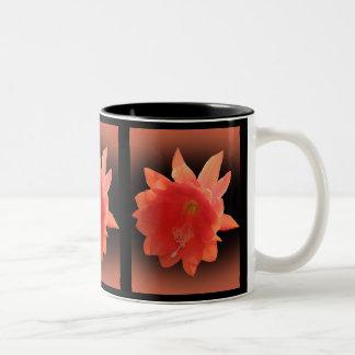 Cactus de orquídea - Epiphyllum Ackermannii - flor Tazas De Café