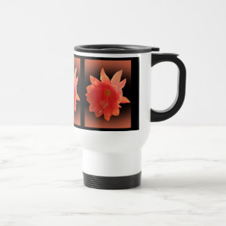 Cactus de orquídea - Epiphyllum Ackermannii - flor Tazas