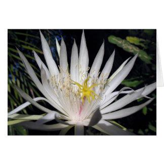 Cactus de orquídea tarjeta de felicitación