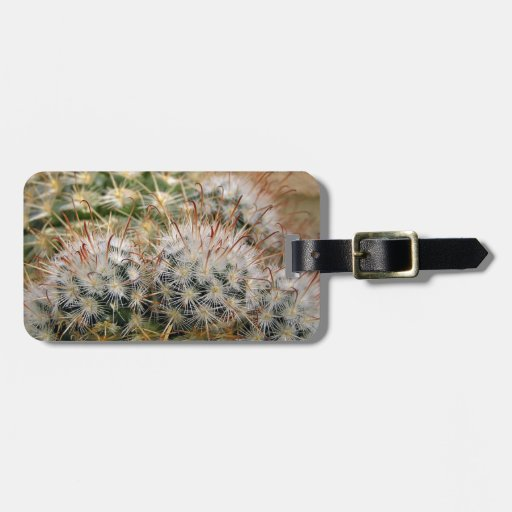Cactus de punta rojo etiquetas bolsas