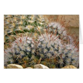 Cactus de punta rojo tarjeta