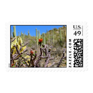 Cactus de Tucson Franqueo