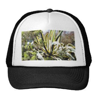 Cactus del agavo gorros