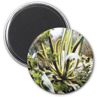 Cactus del agavo iman de nevera