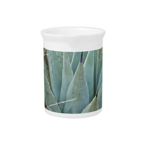 Cactus del agavo jarron