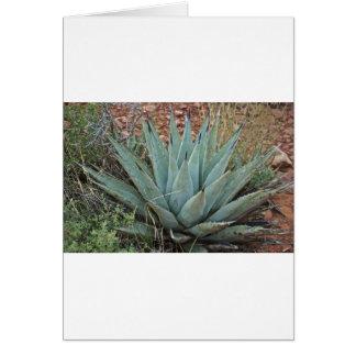 Cactus del agavo tarjetón