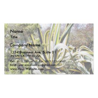 Cactus del agavo tarjetas de visita