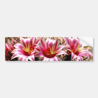 Cactus del anzuelo etiqueta de parachoque