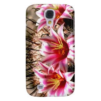 Cactus del anzuelo