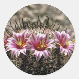 Cactus del anzuelo pegatina redonda