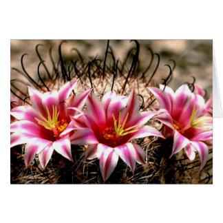 Cactus del anzuelo tarjetón
