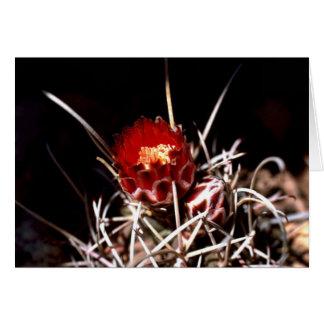 Cactus del anzuelo felicitacion