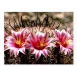 Cactus del anzuelo tarjeta postal
